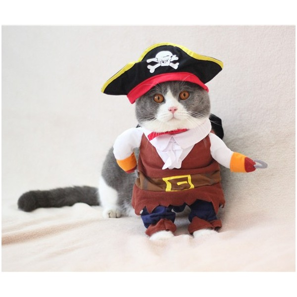 deguisement pirate chat
