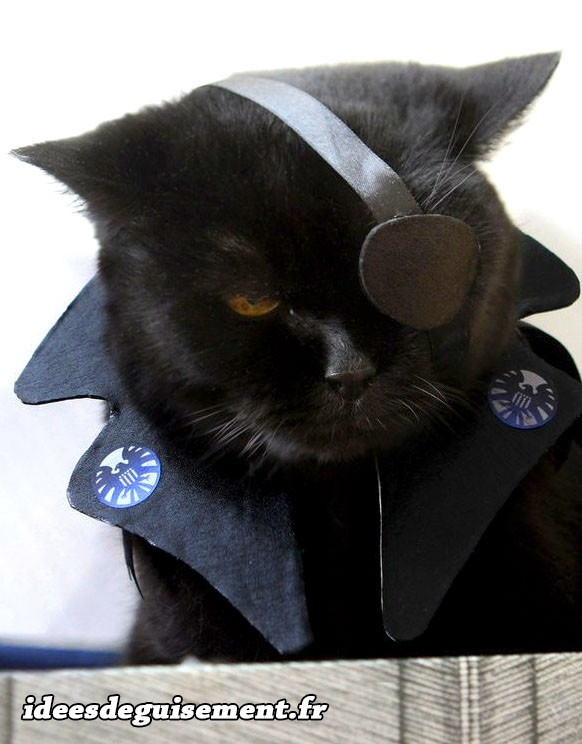 deguisement pirate pour chat
